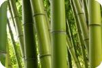 process-1-bamboo